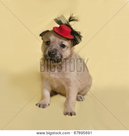 Little Yellow Puppy In Red Hat Sits On Yellow