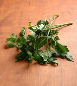 foto of cilantro  - Fresh green cilantro on a wooden table - JPG