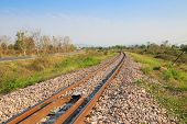 picture of tree lined street  - Railway line passing through the green plants - JPG