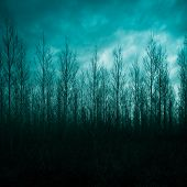 picture of mystical  - Silhouette of pine forest with mystic sky - JPG