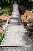 picture of langkawi  - Suspension bridge in tropical forest - JPG