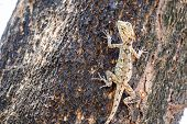 picture of fanny  - Brown lizard in park  - JPG