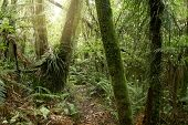 picture of jungle  - Trees and ferns in tropical jungle - JPG