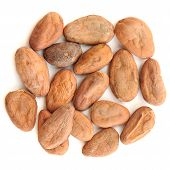 image of cocoa beans  - Raw cocoa beans in round shape isolated top view - JPG