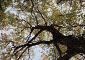 Looking Up A Tree. poster