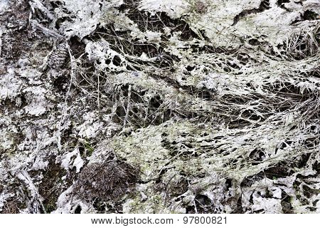 Dried White Mud