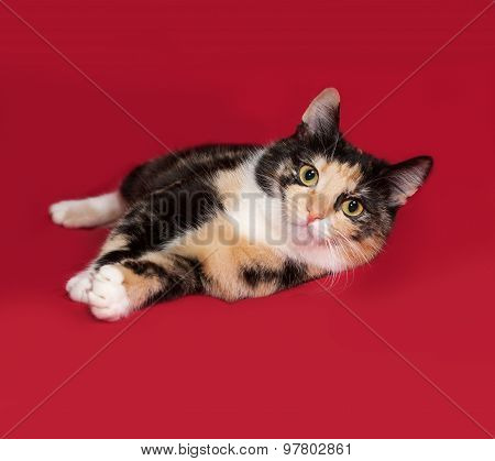 Tricolor Cat Lying On Red