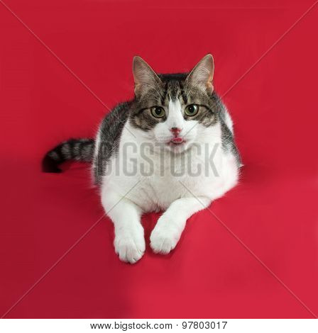 Tabby And White Cat Is Lies On Red