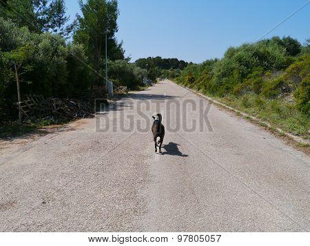 An alert dog on the road in Croatia