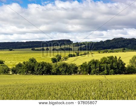 Summer Landscape With Green Fields