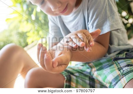 Young Child Examining A Ladybug