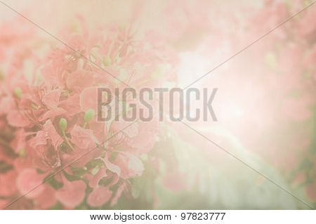 Red Flamboyant Flower On Paper Background