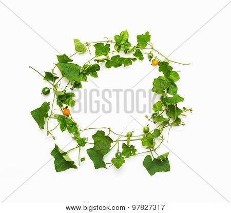 Collage Of Vine Leaves On White Background (clipping Path)