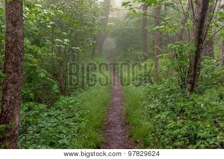 Straight Trail In The Fog