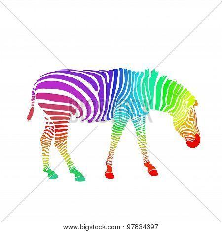 Rainbow zebra isolated on white background. Vector