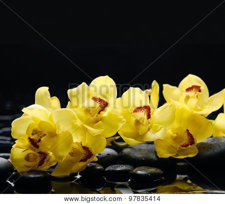 branch yellow orchid with therapy stones