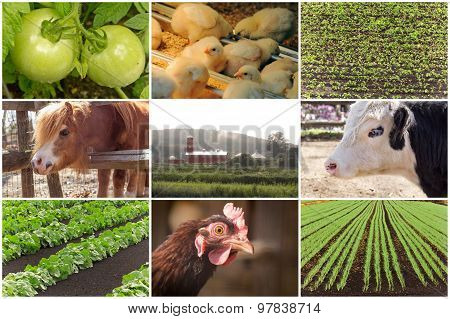 Farm Animal Collage
