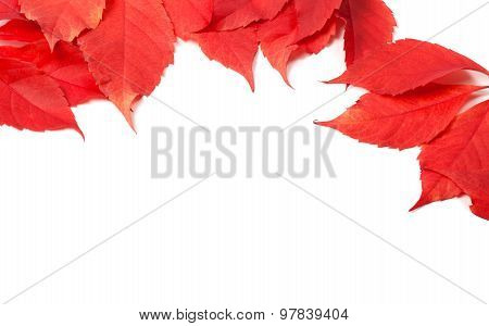 Autumn Leaves Frame (virginia Creeper Leaves)