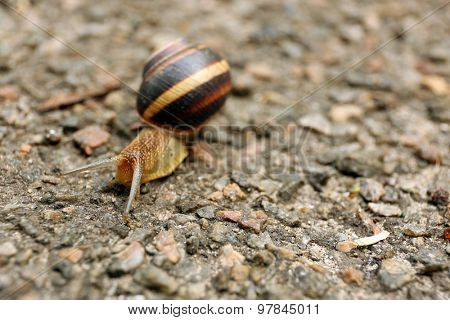 Snail creeping on ground