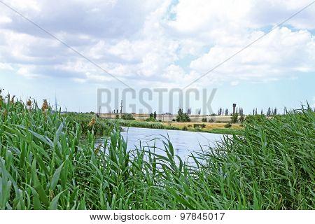 Beautiful lake with bulrush