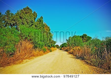 Dirt Road Under A Clear Sky