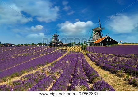 Lavender Fields With Windmill