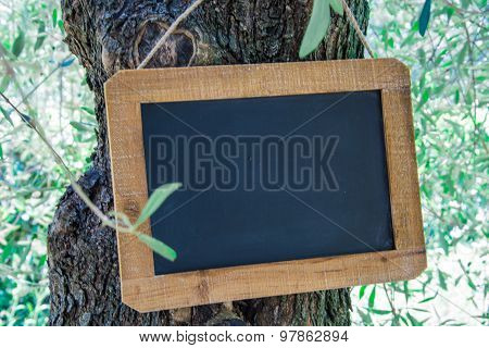 Wooden Slate In Mediteraneen Tree