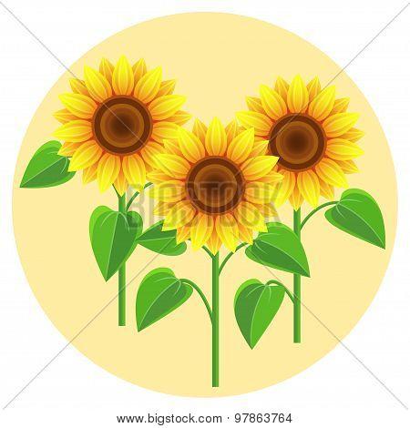 Beautiful Flowers Sunflowers