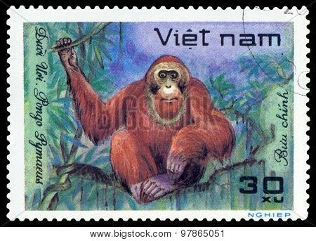 Vintage  Postage Stamp.  Orangutan.