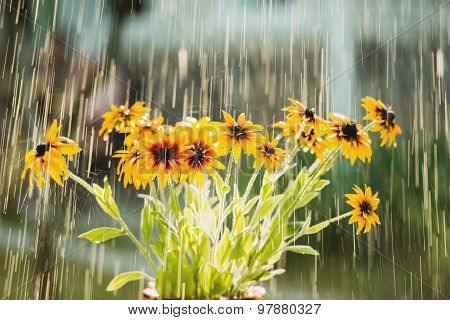 Summer rain and flowers of echinacea