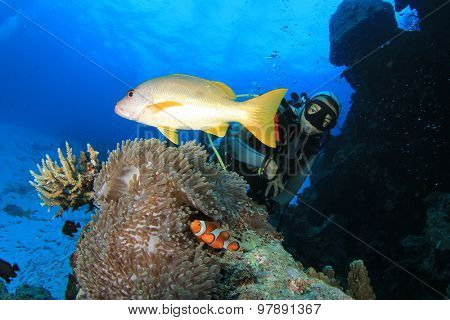 Female scuba diver exploring coral reef underwater with fish