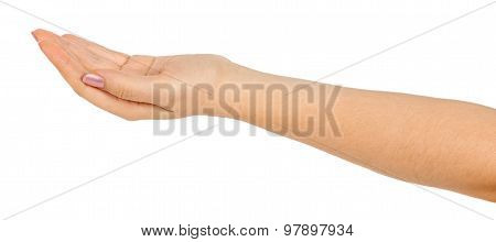 Open Palm Hand Gesture Of Female Hand