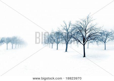 Huerto de invierno cubierto de nieve
