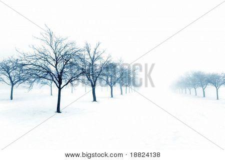 Huerta congelado en un día de nieve