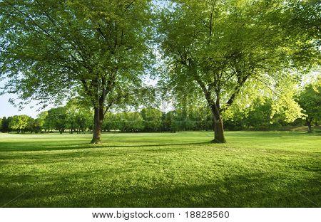 Sonnigen Park am Nachmittag