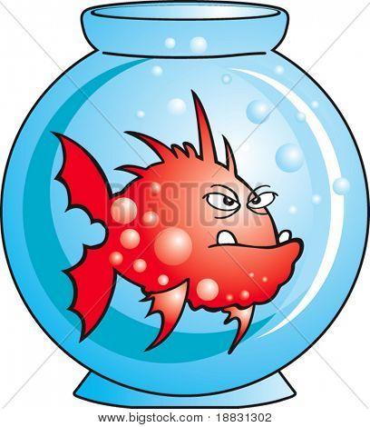 Red angry Comic fish in aquarium