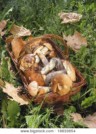 the basket with a mushrooms