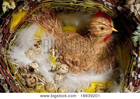 Brood straw quail in nest on eggs