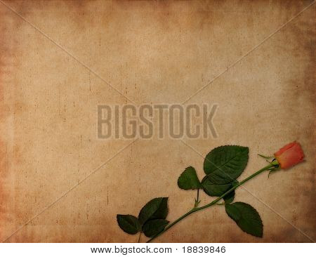 Old ancient parchment with red rose - paper texture background
