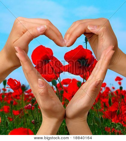 Female hands showing heart symbol over colorful poppy field summer nature background love and peace concept isolated with clipping path