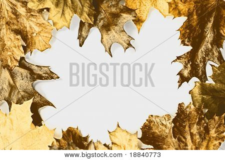 Frame made from yellow dry maple and oak leaves on white background