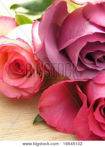 three beautiful roses on top of a wooden table in the garden , expressing the feeling of summer