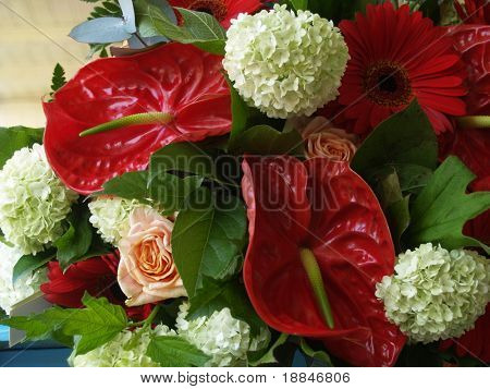 close up shot of a wonderful abundant bouquet with snowballs, roses and anthurium