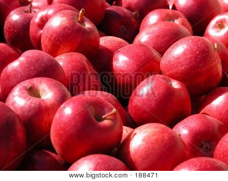 Oddles Of Apples