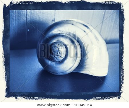 photographic reproduction cyanotype delft blue shell