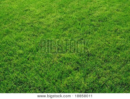 Fresh spring green grass. Natural grass texture