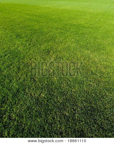 Green grass texture with a perspective