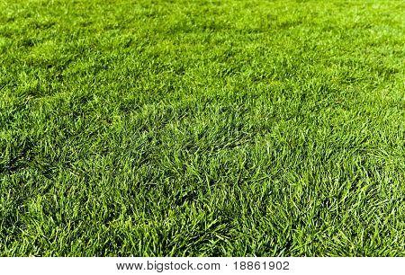 Grown up green grass texture
