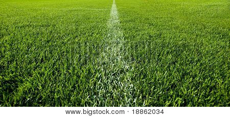 White line on the green grass of a soccer field
