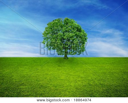 Single tree on green grass and over blue sky